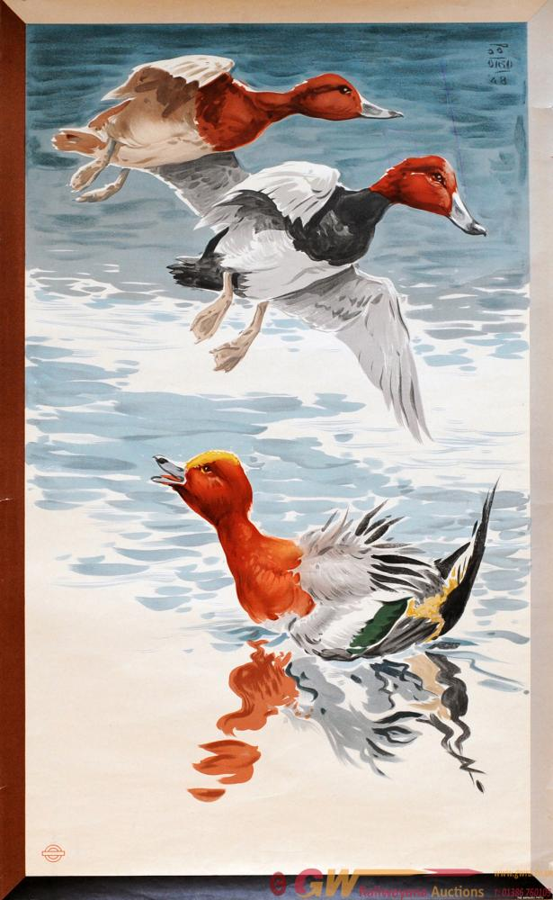 Poster London Transport 'Wild Ducks' By Richard