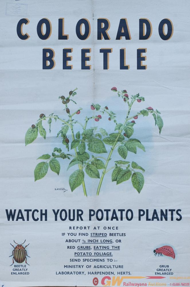 Poster COLORADO BEETLE WATCH YOUR POTATO PLANTS By